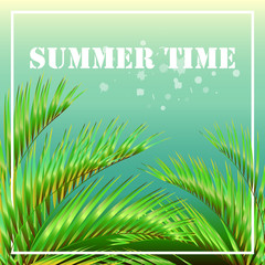 tropical palm tree, leaves,summer time