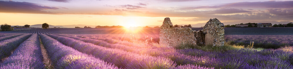 Papiers peints Lavande PANORAMIC LAVENDER IN SOUTH OF FRANCE