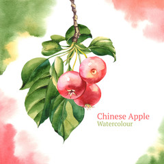 Watercolour apples with leafs on branch