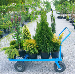 Obraz Buying plants in a garden center - fototapety do salonu