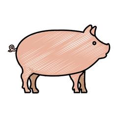 pig animal farm isolated icon vector illustration design