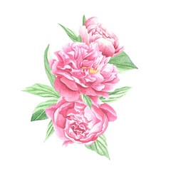 Watercolor peonies bouquet, hand drawn flowers with green leaves isolated on white background. Floral art design.