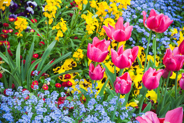 Wall Mural - Colorful decorative flowers, garden flowerbed