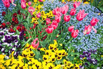 Wall Mural - Garden flowerbed. Background photo