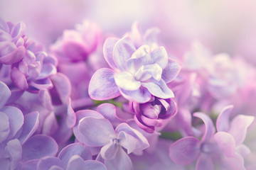 Klistermärke - Lilac flowers bunch violet art design background
