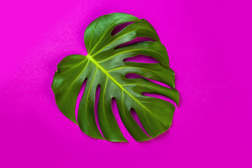 Green tropical palm leaf on pink colored background. Minimal flat lay style. Overhead, top view, copy space