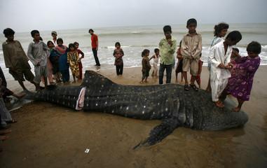 Children stand on a dead whale shark along a beach in Karachi
