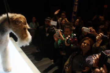 People take pictures of a Schnauzer after having been groomed during a master class at Propet pet fair at IFEMA fairgrounds in Madrid