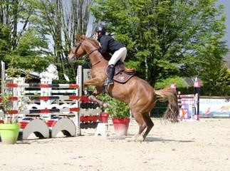 concours hippique,saut d'obstacles