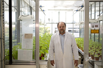 Klimyuk, COO of the company Icon Genetics poses in front of Tobacco plants (Nicotiana benthamiana) in a laboratory in Halle