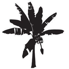 Silhouette of young banana with a flower and fruits