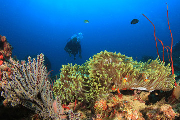 Scuba diver, coral reef and fish underwater