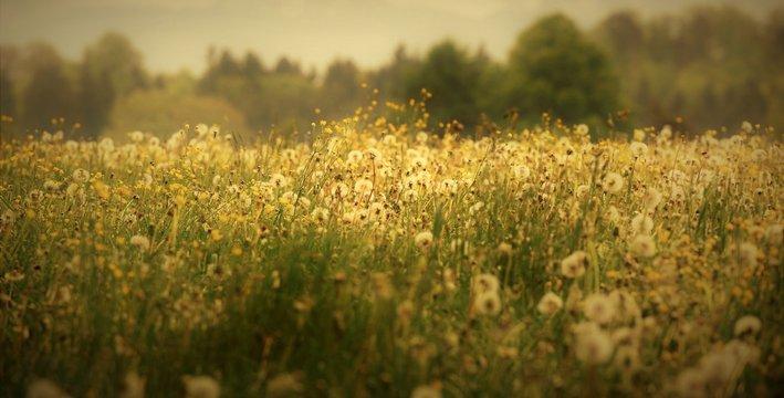 suisse rurale...entre prairie et forêt