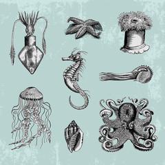 Sea life vintage illustrations