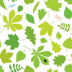 Seamless pattern of different tree leaves - oak, chestnut, birch, Rowan, linden, jasmine, lilac, maple, willow, poplar, sycamore and insects - butterfly, sugarcane beetle, dragonfly.