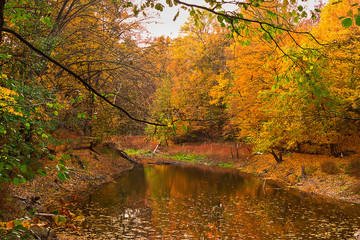 autumn landscape with forest lake and orange trees