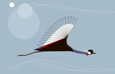 Crowned crane in flight
