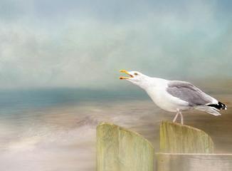 Seagull crowing over ocean background.  Digital textured artwork using my original image.
