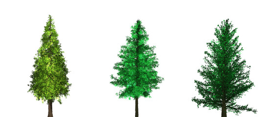 Fresh green trees isolated on white background.