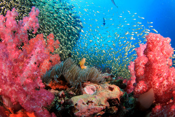 Foto op Canvas Onder water Coral reef and fish underwater