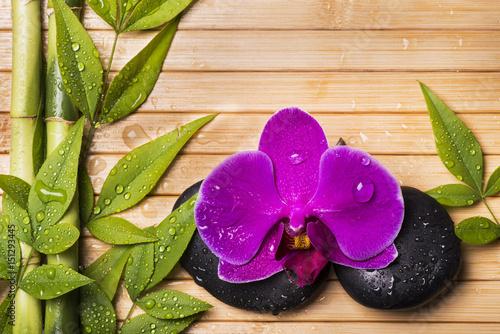 Orchidea e bamb con gocce d 39 acqua stockfotos und for Finestra con gocce d acqua
