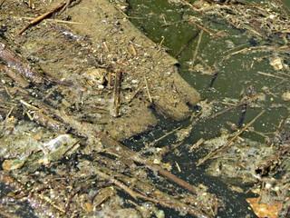 Agua estancada / Standing water