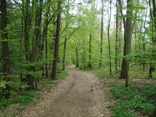 Waldweg in Monheim