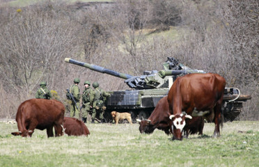Cows graze near a tank and servicemen, believed to be Russian, outside a military base in Perevalnoye, near the Crimean city of Simferopol