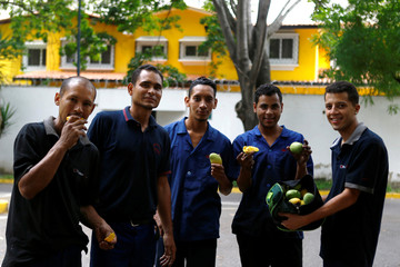 Workers pose for a picture with mango fruit after dislodging during their lunch break in Caracas