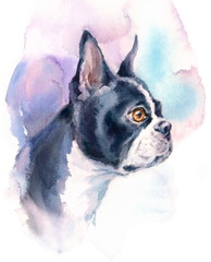 Watercolor Dog Boston Terrier Portrait - Hand Painted Animals Pets Illustration isolated on white background