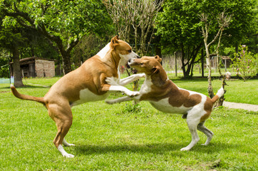 dogs playing with each other outside