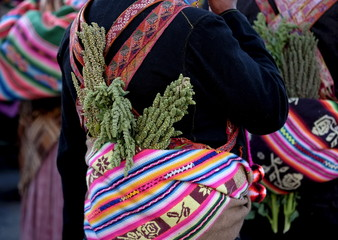 An indigenous man carries quinoa plants as part of his costume during the Anata Andina  parade in Oruro