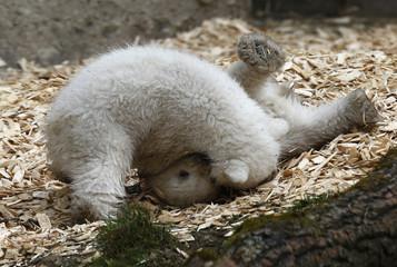 Twin polar bear cubs play outside in their enclosure at Tierpark Hellabrunn in Munich