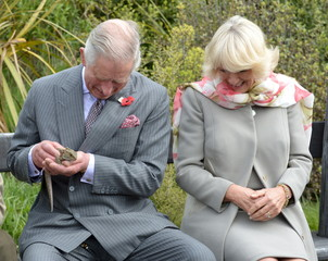 Britain's Prince Charles and Camilla, Duchess of Cornwall react as a large bumblebee briefly lands on the Prince's pants as he handles a native tuatara lizard during a visit to the Orokonui Eco sanctuary near Dunedin