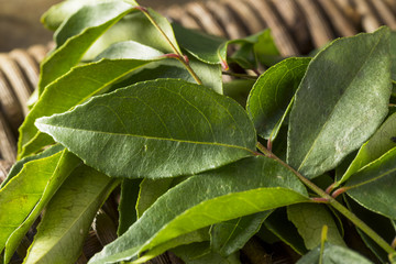 Raw Green Organic Curry Leaves