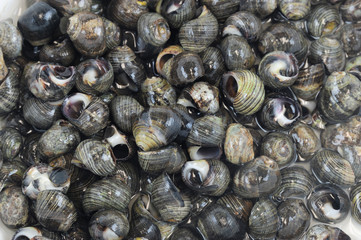 close up on fresh sea snail in seafood market