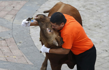 A participant fights a bull during a traditional game of ethnic Hui minority in Jiaxing