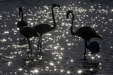 Sunlight sparkles off the water's surface as pink flamingos gather in the Camargue regional nature park