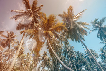 palm trees at summer day in resort