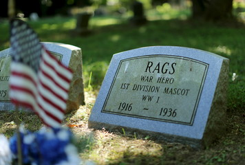 """The gravestone of WWI mascot hero """"Rags"""" is seen at Aspin Hill Memorial Park in Maryland"""