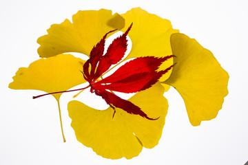 枯葉のイメージ