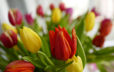 A bunch of tulips is seen on a table of a restaurant in the village Seeheim near Darmstadt