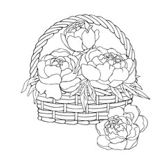 vector contour illustration of decorative flowers peony in the basket