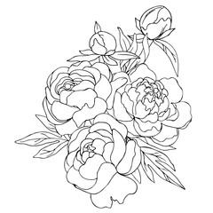 vector contour illustration of decorative flowers peony bouquet