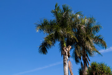 Palm trees in sky