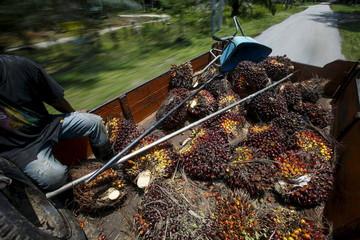 File photo of an Indonesian worker sitting beside palm oil fruit outside Kuala Lumpur