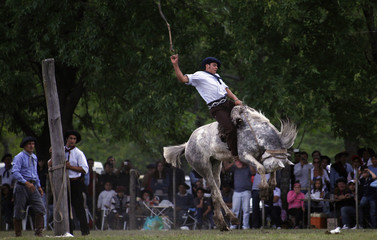 A gaucho rides an untamed horse during Tradition Day celebrations in San Antonio de Areco, some 116 km (72.5 miles) north of Buenos Aires