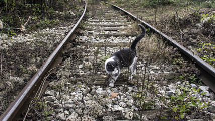 Stray cat prowling on the railroad track