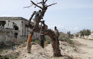 Internally displaced children play on top of a tree near a settlement in Taleh neighborhood, Hodon district south of Somalia's capital Mogadishu