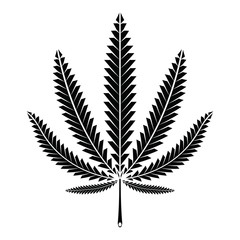 Cannabis (marijuana) leaf